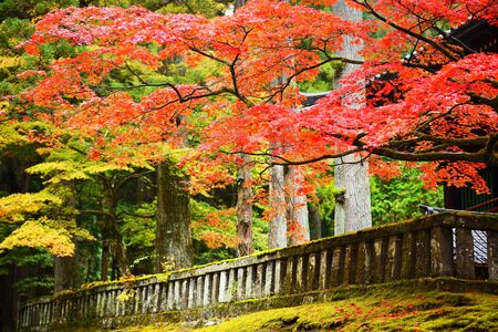 Autumn foliage in Nikko, Japan.