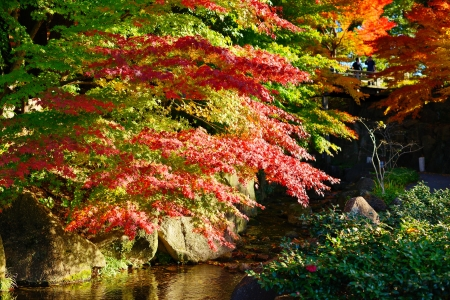 Fall foliage at  in Nagoya, Japan. photo