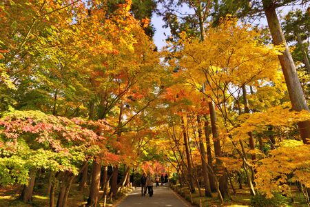 antiquity: KYOTO - NOVEMBER 28: Tourist walk under brilliant fall foliage at Ryoan-ji Temple November 28, 2012 in Kyoto, JP. Fall foliage viewing is a Japanese tradition dating back to antiquity.