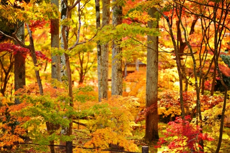 koyo: Fall foliage at Eikando Temple in Kyoto, Japan. Stock Photo