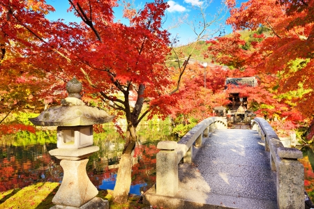 Fall foliage at Eikando Temple in Kyoto, Japan. 1119