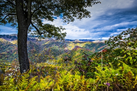newfound gap: Autumn in the Smoky Mountains National Park.