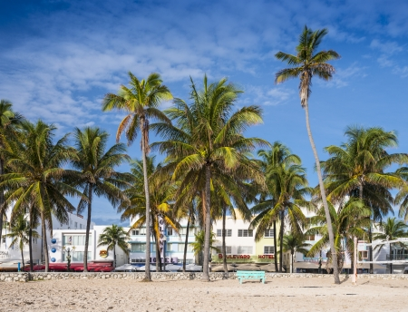 raod: MIAMI, FLORIDA - JANUARY 6, 2014: Palm trees line Ocean Drive. The raod is the main thoroughfare through South Beach.