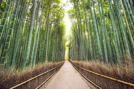 Bamboo forest of Kyoto, Japan. photo