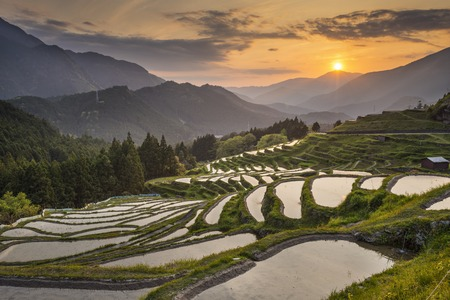 Japanese rice terraces at sunset. Maruyama-senmaida, Kumano, Japan. photo