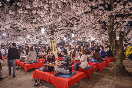 of cultural: KYOTO, JAPAN - APRIL 3, 2014: People enjoy the spring season by partaking in nighttime Hanami festivals. The annual festivals coincide with the seasonal blooming of the cherry blossoms.