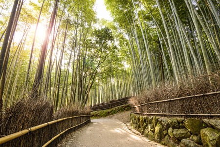 Bamboo forest of Kyoto, Japan. Foto de archivo