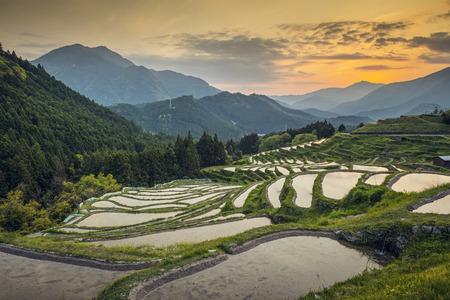 Japoński tarasy ryżowe na zachód słońca. Maruyama-Senmaida, Kumano, Japonia. Zdjęcie Seryjne