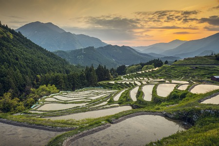 Terrasses de riz japonais au coucher du soleil. Maruyama-Senmaida, Kumano, Japon. Banque d'images