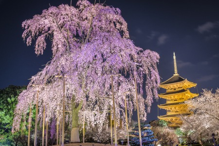 To-ji pagoda in the springtime in Kyoto, Japan.