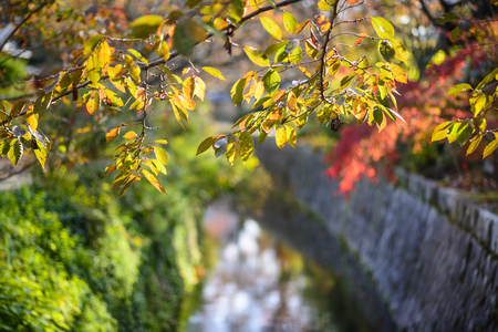 Kyoto, Japan at Philosophers Path in the autumn. photo