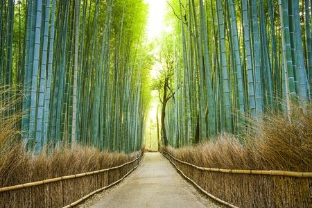 Kyoto, Japan bamboebos. Stockfoto