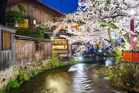 Kyoto, Japan at the Shirakawa River during the spring cherry blosson season.