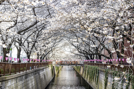 tokyo, Japan at Meguro canal in the spring. photo