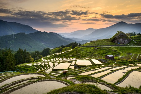 japan sky: Rice Paddies in Kumano, Japan.
