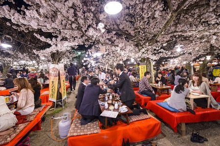 hanami: KYOTO, JAPAN - APRIL 3, 2014: People enjoy the spring season by partaking in nighttime Hanami festivals. The annual festivals coincide with the seasonal blooming of the cherry blossoms.