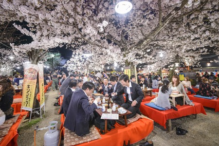 blossom tree: KYOTO, JAPAN - APRIL 3, 2014: People enjoy the spring season by partaking in nighttime Hanami festivals. The annual festivals coincide with the seasonal blooming of the cherry blossoms.