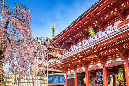 asakusa: Senso-ji Temple in Asakusa, Tokyo, Japan during spring Sakura season.