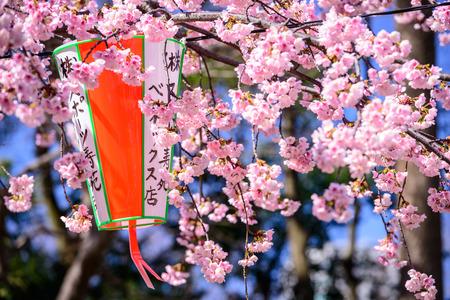 上野公園で東京都の春。 写真素材