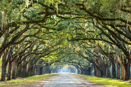 landschap: Savannah, Georgia, USA eiken bomen omzoomde weg bij historische Wormsloe Plantation.