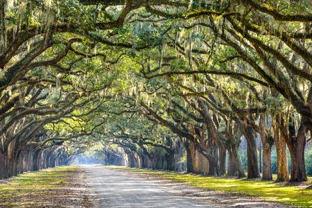 Savannah, Georgia, USA Eiche gesäumten Straße im historischen Wormsloe Plantation.