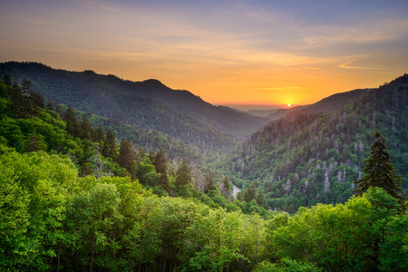 green forest: Sunset at the Newfound Gap in the Great Smoky Mountains. Stock Photo