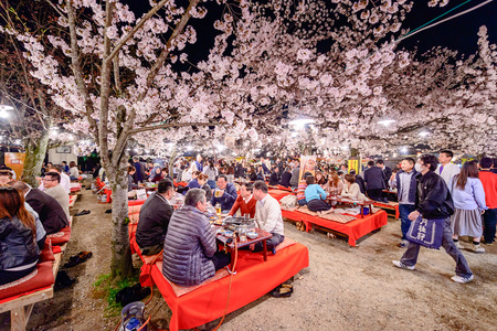 hanami: KYOTO, JAPAN - APRIL 3, 2014: People enjoy spring season by partaking in nighttime Hanami festivals in Maruyama Park. The annual festivals coincide with the seasonal blooming of the cherry blossoms.