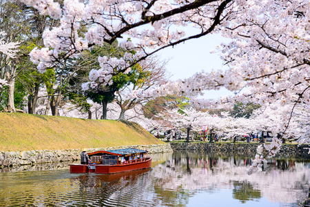 moat around Hikone Castle in the spring in Hikone, Japan Stok Fotoğraf - 37690328