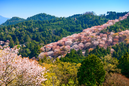 seaonal: landscape in the spring in Yoshinoyama, Nara, Japan Stock Photo