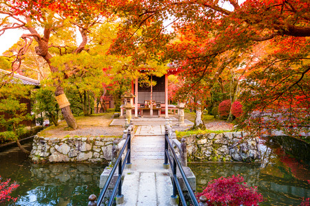 japanese maple: Fall foliage in Kyoto, Japan. Editorial