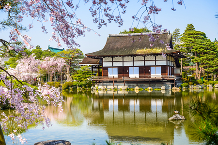 ground cherry: spring at Heian Shrine in Kyoto, Japan Editorial
