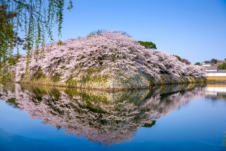 moat wall: castle moat during spring season in Hikone, Japan Stock Photo