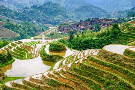paddies: hillside rice terraces landscape in Yaoshan Mountain, Guilin, China Stock Photo