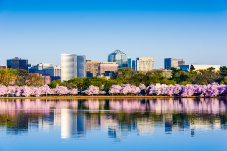 the Tidal Basin during cherry blossom season with the Rosslyn business distict citycape in Washington, D.C.