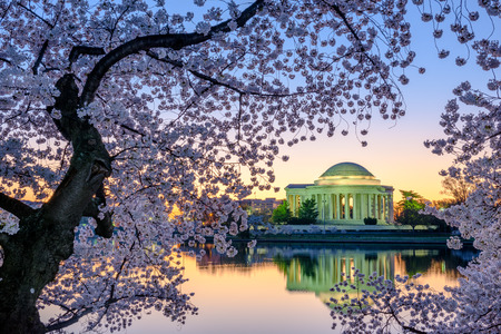 cerezos en flor: Washington, DC en el Jefferson Memorial durante la primavera. Editorial