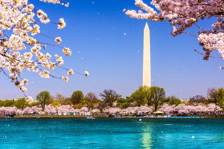 washington monument: Washington, D.C. Monument during spring. Stock Photo