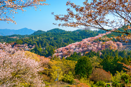 seaonal: Yoshinoyama, Nara, Japan spring landscape. Stock Photo