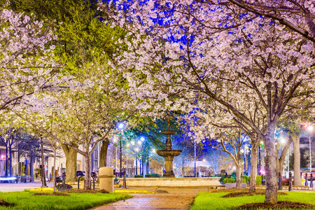 Macon in Georgia, USA downtown with spring cherry blossoms. Stock Photo