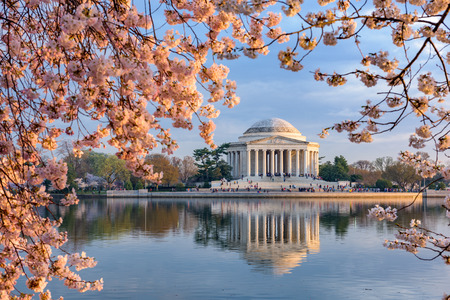 the tree to blossom: Washington, DC at the Tidal Basin and Jefferson Memorial during spring.