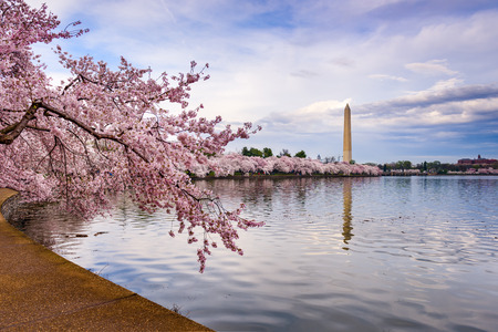 washington monument: Washington DC, USA at the tidal basin with Washington Monument in spring season.