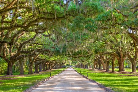 in charleston: Charleston, South Carolina, USA tree lined plantation entrance. Stock Photo