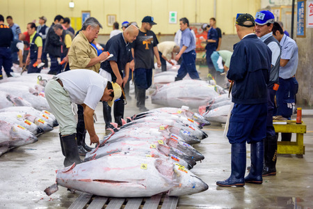bidding: TOKYO, JAPAN - AUGUST 1, 2015: Prospective buyers inspect tuna displayed at Tsukiji Market. Tsukiji is considered the worlds largest fish market.