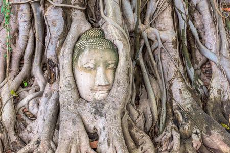 cabeza de buda: Ayutthaya, Tailandia Cabeza de Buda en Wat Mahathat. Foto de archivo