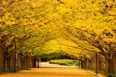 東京都の秋の公園。