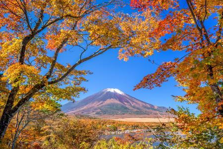 秋の山中湖からの富士山、日本。