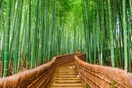 bambu: Kyoto, Japón en el bosque de bambú.