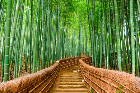 landschap: Kyoto, Japan op de Bamboo Forest. Stockfoto