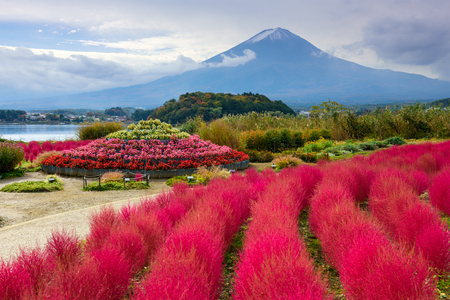 koyo: Fuji Mountain, Japan with kokia bushes at Oishi Park.