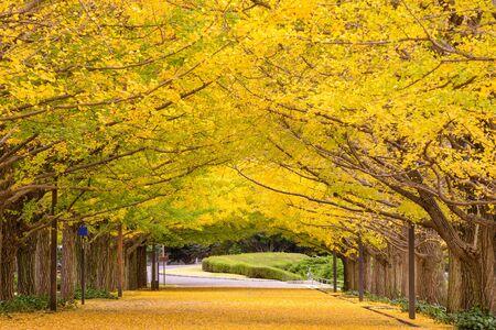 tokyo japan: Tokyo, Japan autumn park. Stock Photo