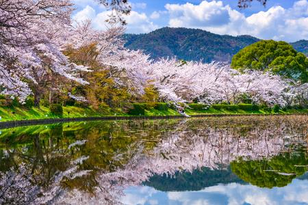 flor de cerezo: Kyoto, Japón en la primavera en el estanque de Daikaku-ji.